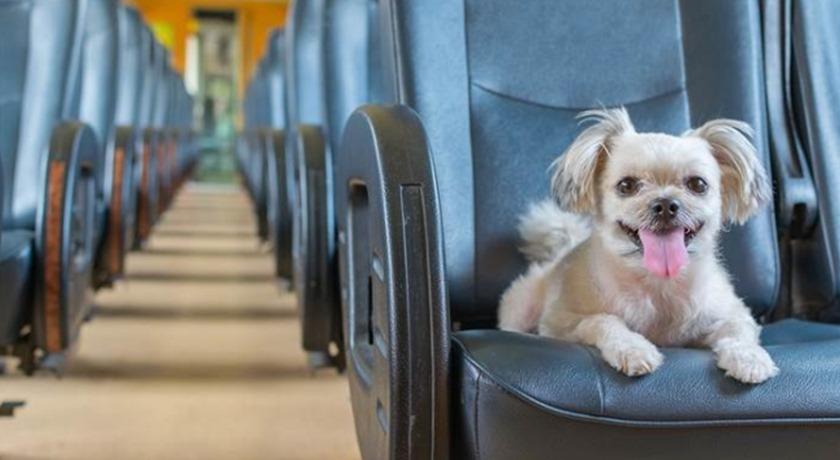 Dessa flygbolag tillåter hundar ombord på flygplanet