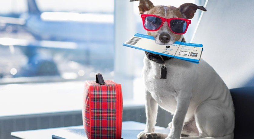 IATA godkänd hundbur – guide