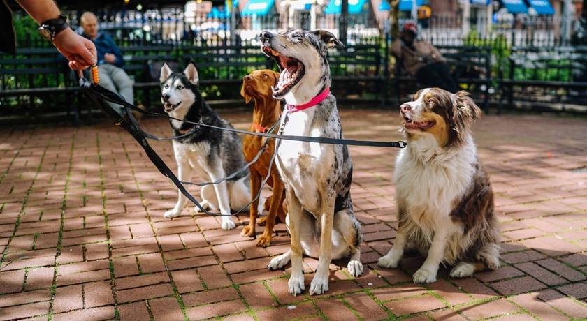 Dygnspassning åt din hund – hundassistansen.se