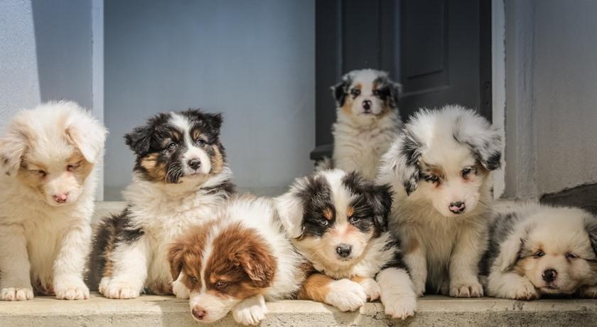 Importera hund från utlandet – så gör du
